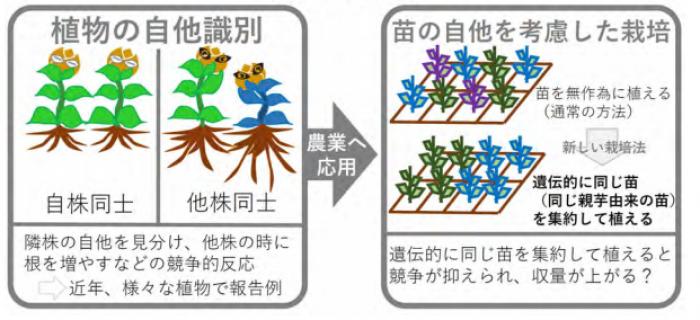 植物の自他識別能力を農業に応用...